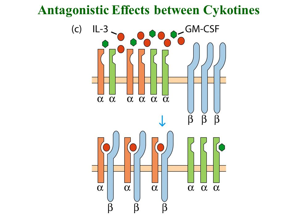 Antagonistic Effects between Cykotines