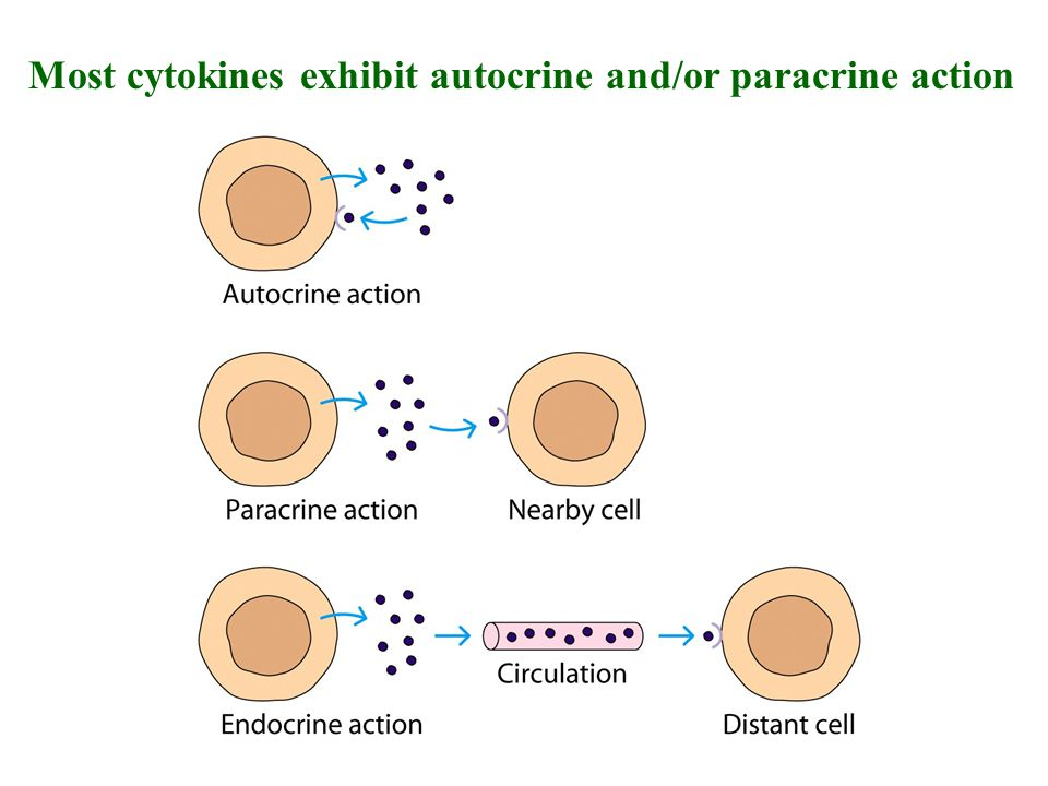 Most cytokines exhibit autocrine and/or paracrine action