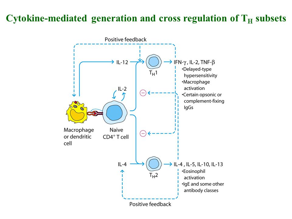 Cytokine-mediated generation and cross regulation of TH subsets
