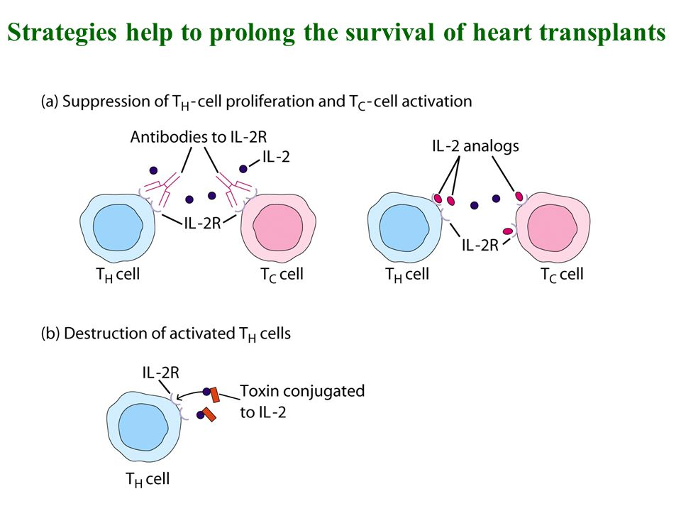 Strategies help to prolong the survival of heart transplants