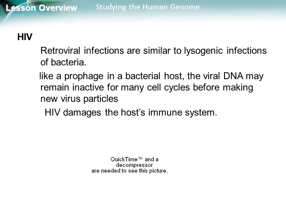 HIV Retroviral infections are similar to lysogenic infections of bacteria.