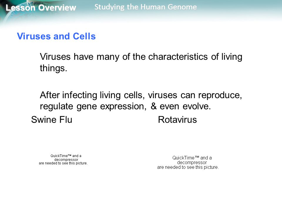 Viruses and Cells Viruses have many of the characteristics of living things.