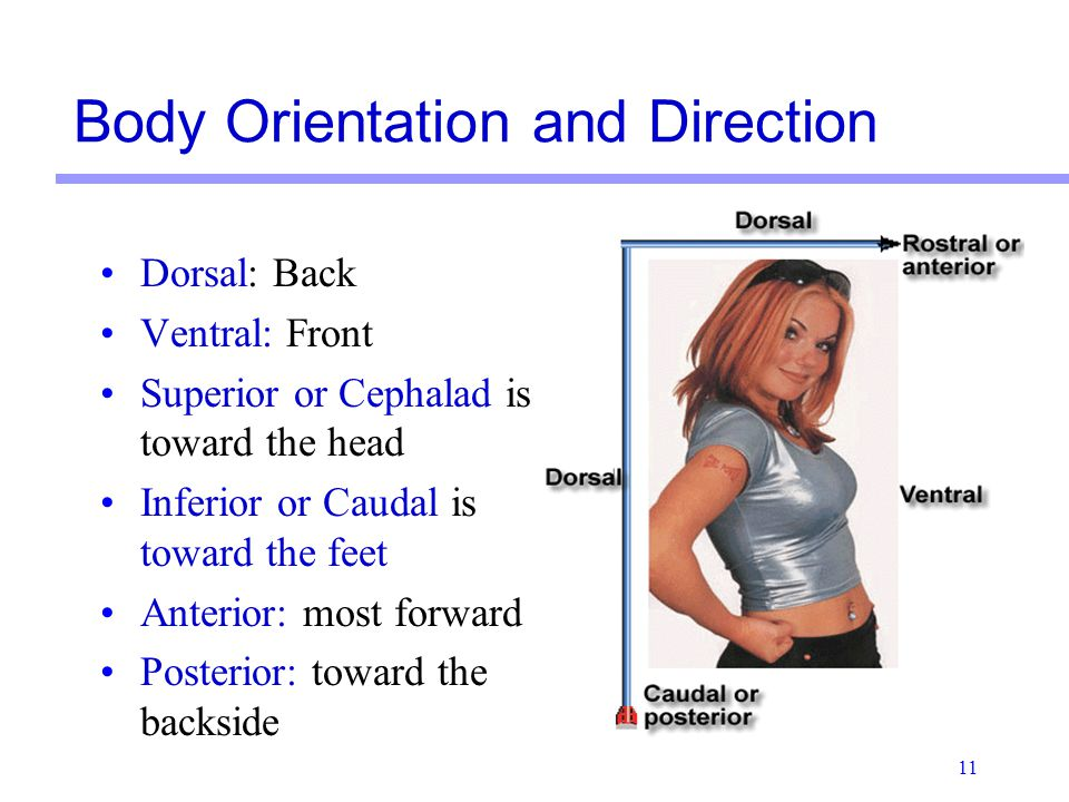 4899421 additionally Thorax And Lungs Learning And Understanding Objectives further 1406277 in addition 2053041 besides 12139319. on body cavities and organs