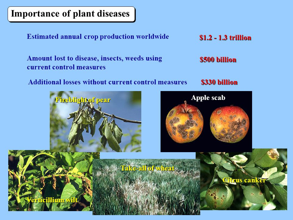 APPLE SCAB MANAGEMENT IN ORGANIC FRUIT ORCHARDS ...