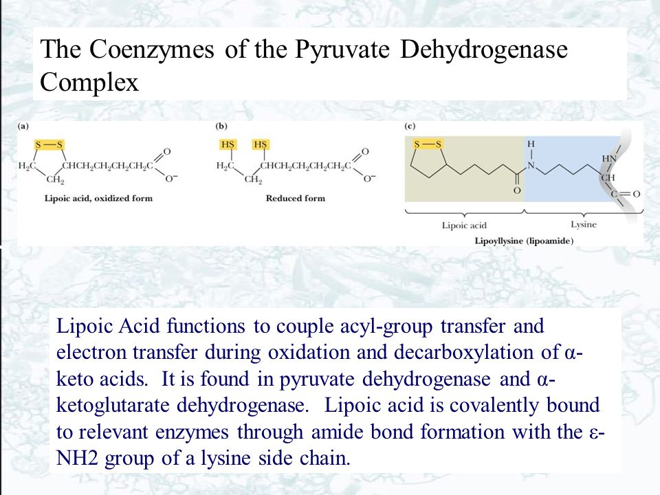 Chapter 19 The Tricarboxylic Acid Cycle Biochemistry by - ppt download