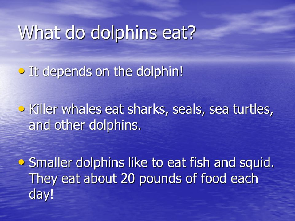 What do dolphins eat It depends on the dolphin!