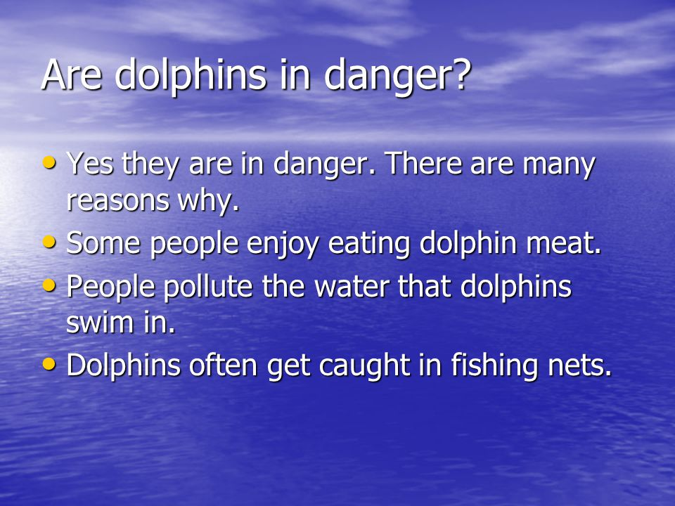Are dolphins in danger Yes they are in danger. There are many reasons why. Some people enjoy eating dolphin meat.
