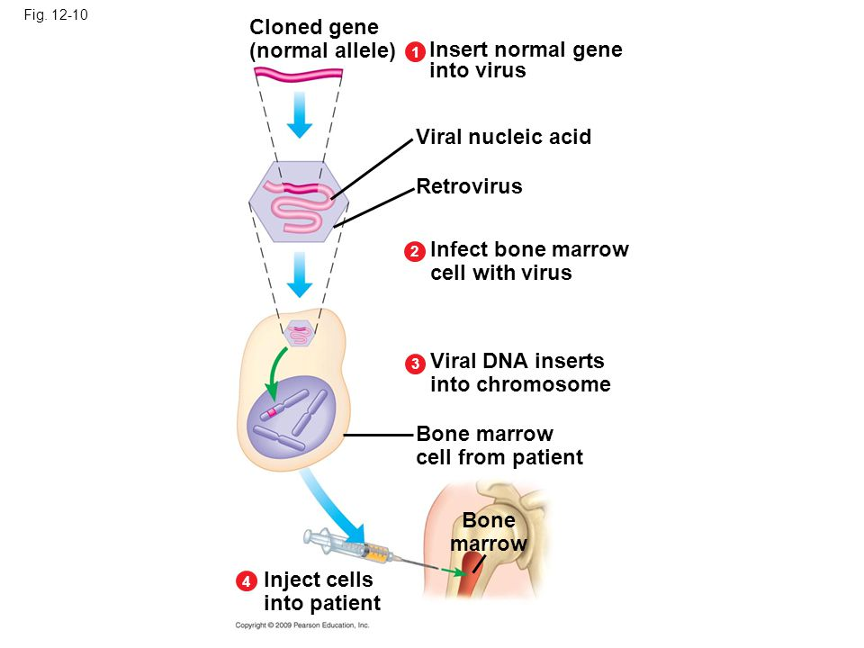 Cloned gene (normal allele) Insert normal gene into virus