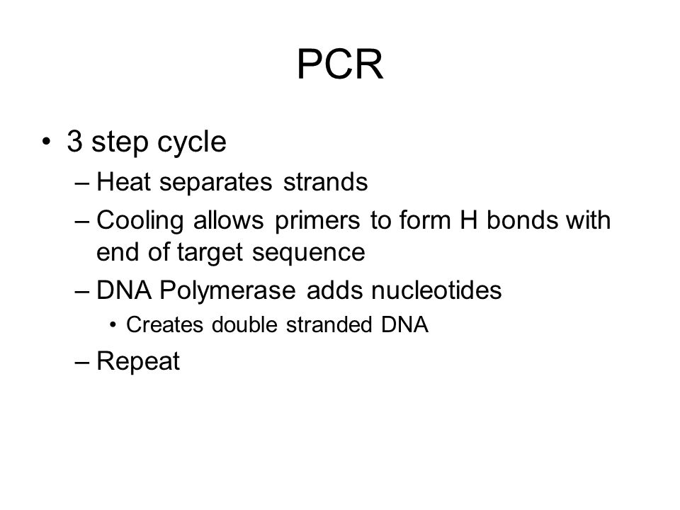 PCR 3 step cycle Heat separates strands
