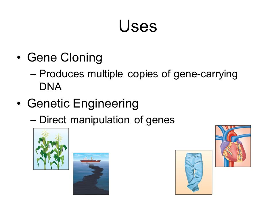 Uses Gene Cloning Genetic Engineering