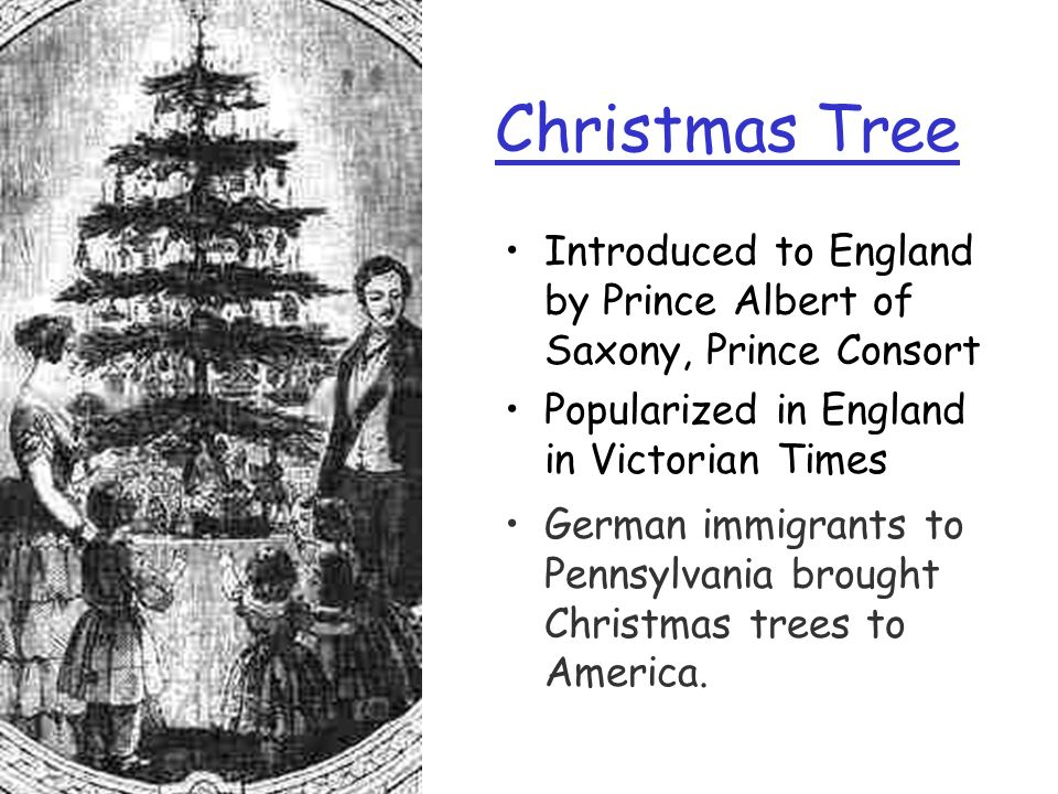 Christmas Tree Introduced to England by Prince Albert of Saxony, Prince Consort. Popularized in England in Victorian Times.