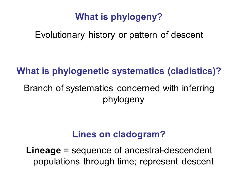 phylogenetic systematics exercise