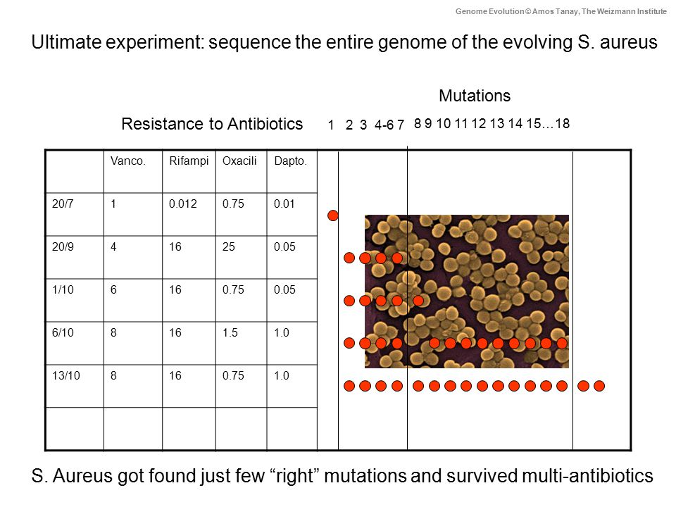 Ultimate experiment: sequence the entire genome of the evolving S