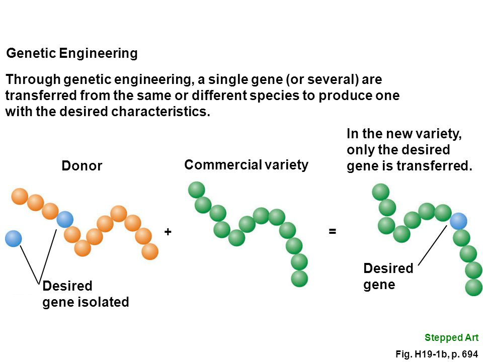 introduction to the endless possibilities of genetic engineering The science of gmos: possibilities and limitations  and the possibilities and limitations of genetic engineering  from definitions of food and genetic engineering to the required.