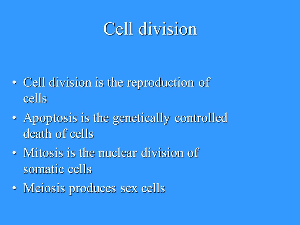 The Cell Life Cycle. - ppt download