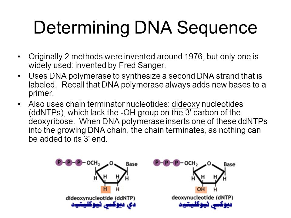 Determining DNA Sequence