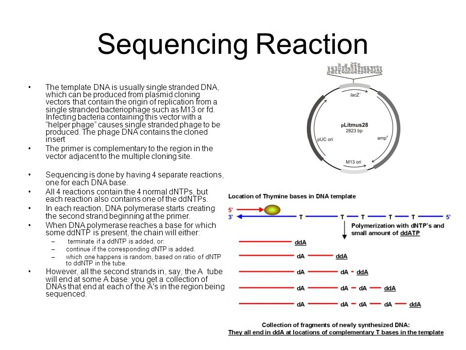 Sequencing Reaction