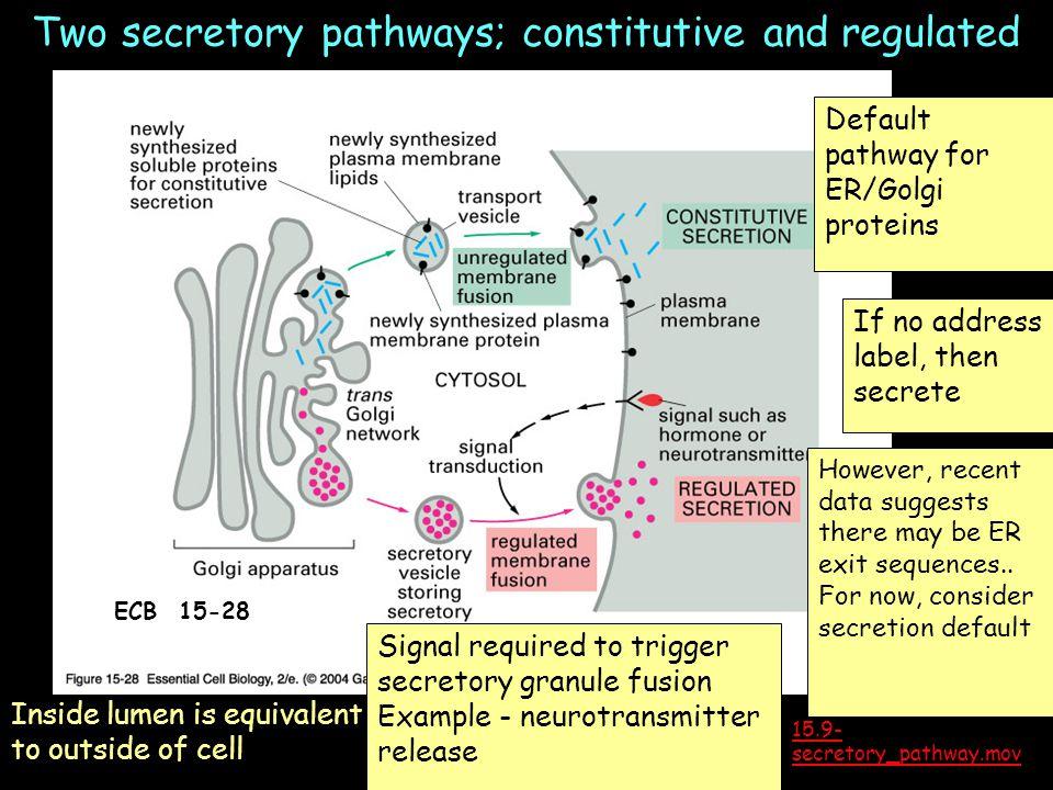 The Pathway Of Secretory Proteins Diagram