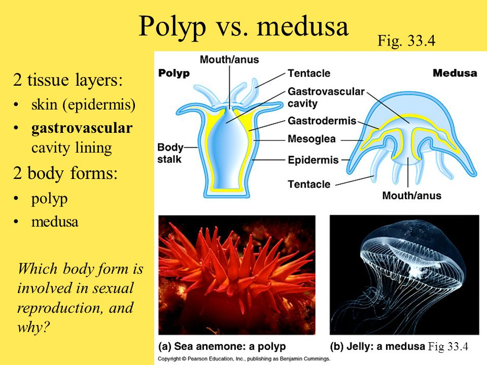 A whirl-wind tour through the most prominent phyla! - ppt download