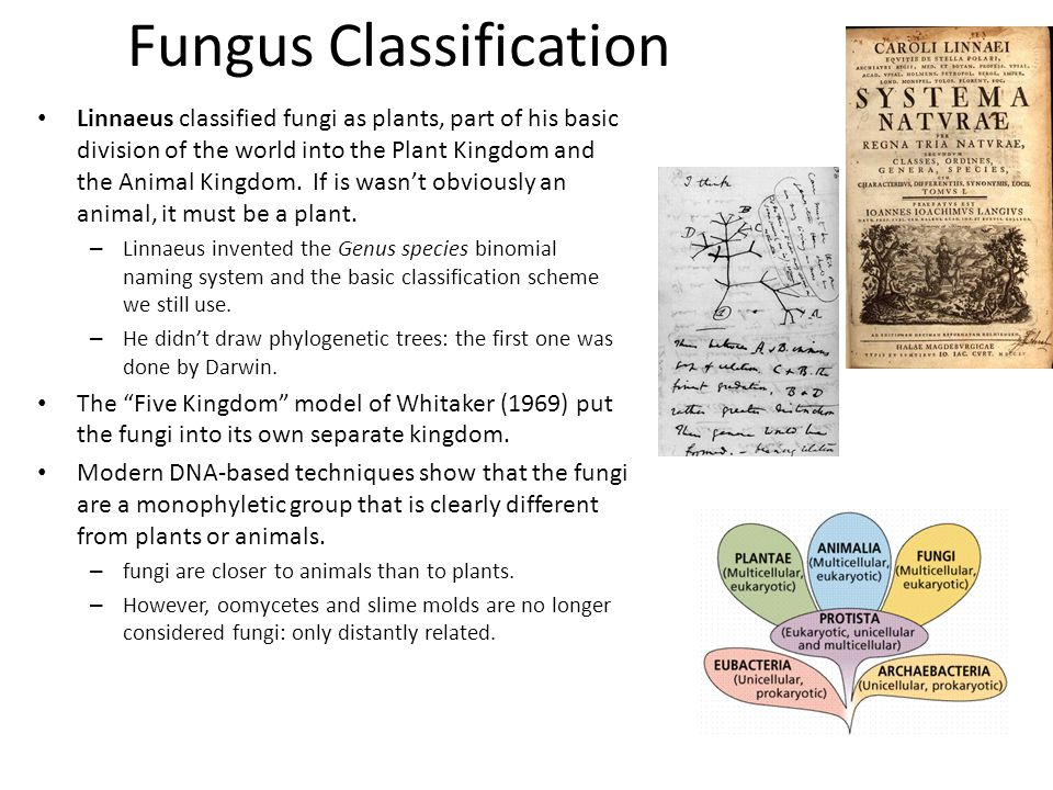 animals plant and fungi mock exam 03_ plants and fungi practice exam 2014 which one of the following types of plant would be classified as a animals well developed vascular system b animals.