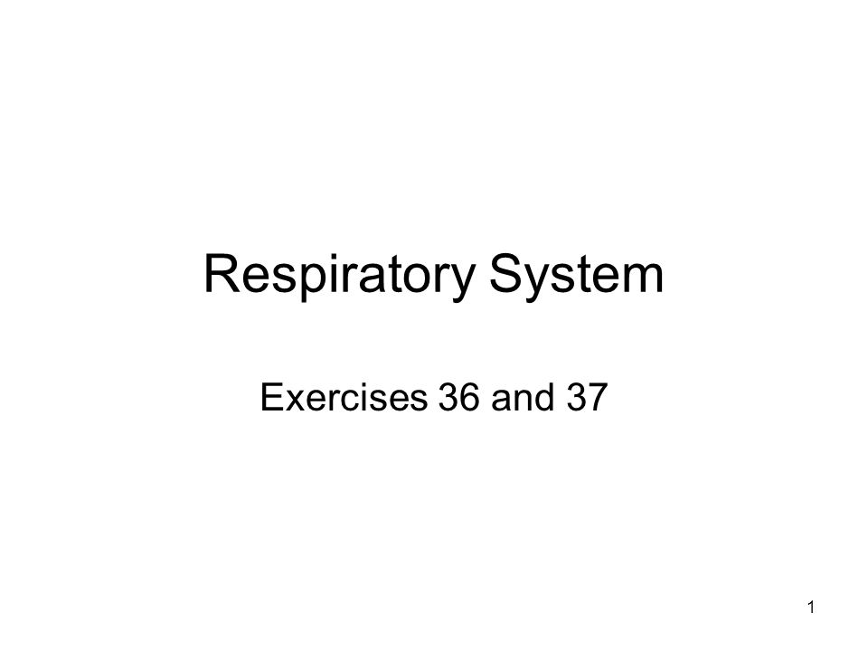 Respiratory System Exercises 36 and 37