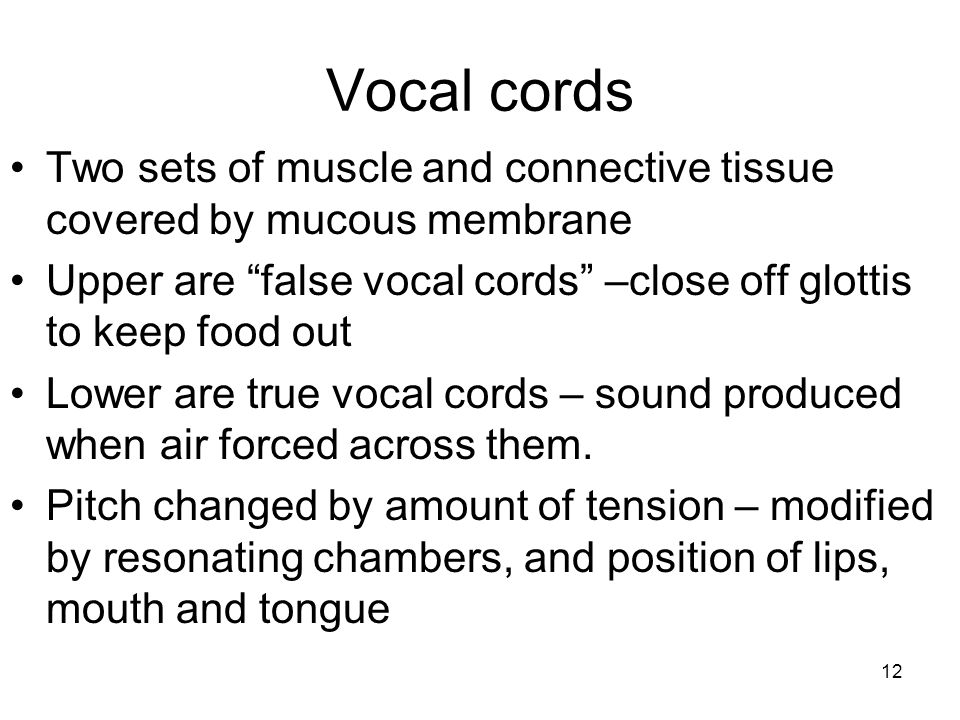 Vocal cords Two sets of muscle and connective tissue covered by mucous membrane. Upper are false vocal cords –close off glottis to keep food out.