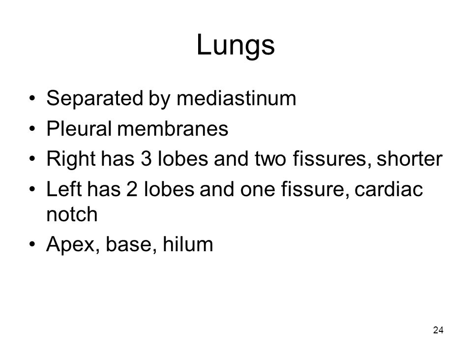 Lungs Separated by mediastinum Pleural membranes