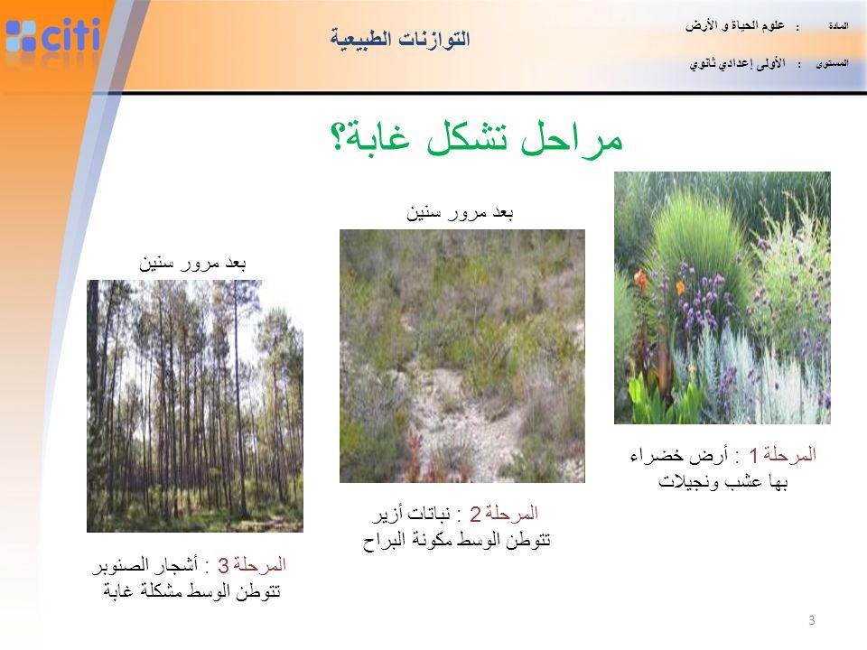 مراحل تشكل غابة؟ التوازنات الطبيعية بعد مرور سنين بعد مرور سنين
