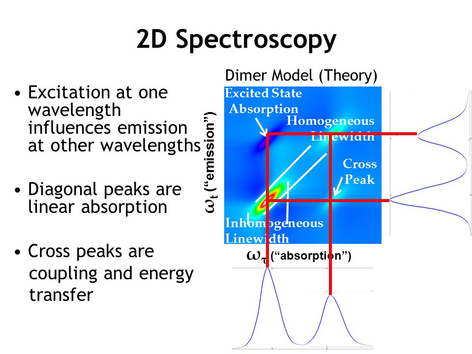 2D Spectroscopy Dimer Model (Theory) Excitation at one wavelength influences emission at other wavelengths.