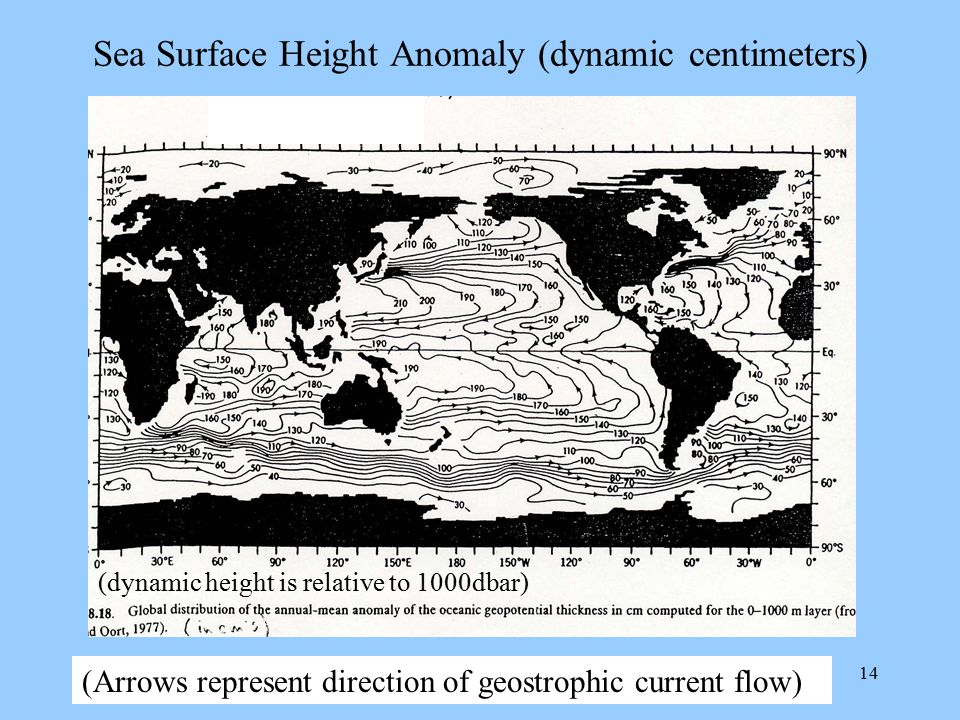 Sea Surface Height Anomaly (dynamic centimeters)