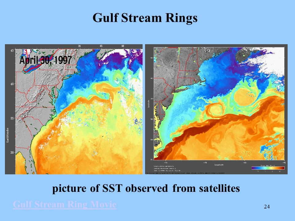 Gulf Stream Rings picture of SST observed from satellites