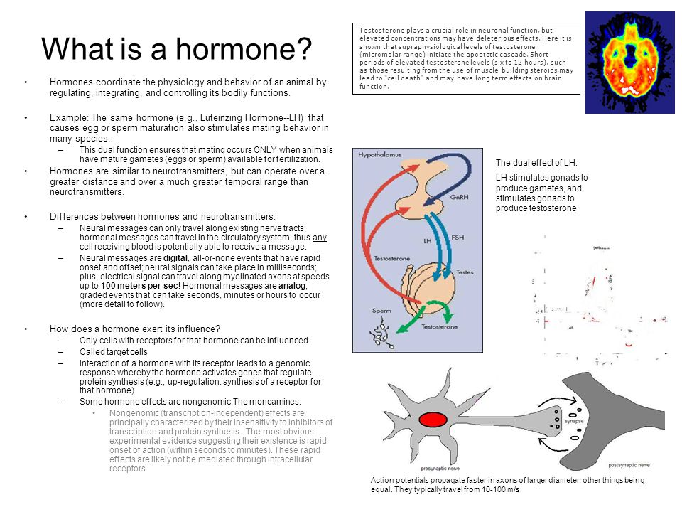 effect of hormones on aggressive behaviour Motivation and emotion, vol 17, no 2, 1993 the effects of hormones, type a behavior pattern, and provocation on aggression in men.