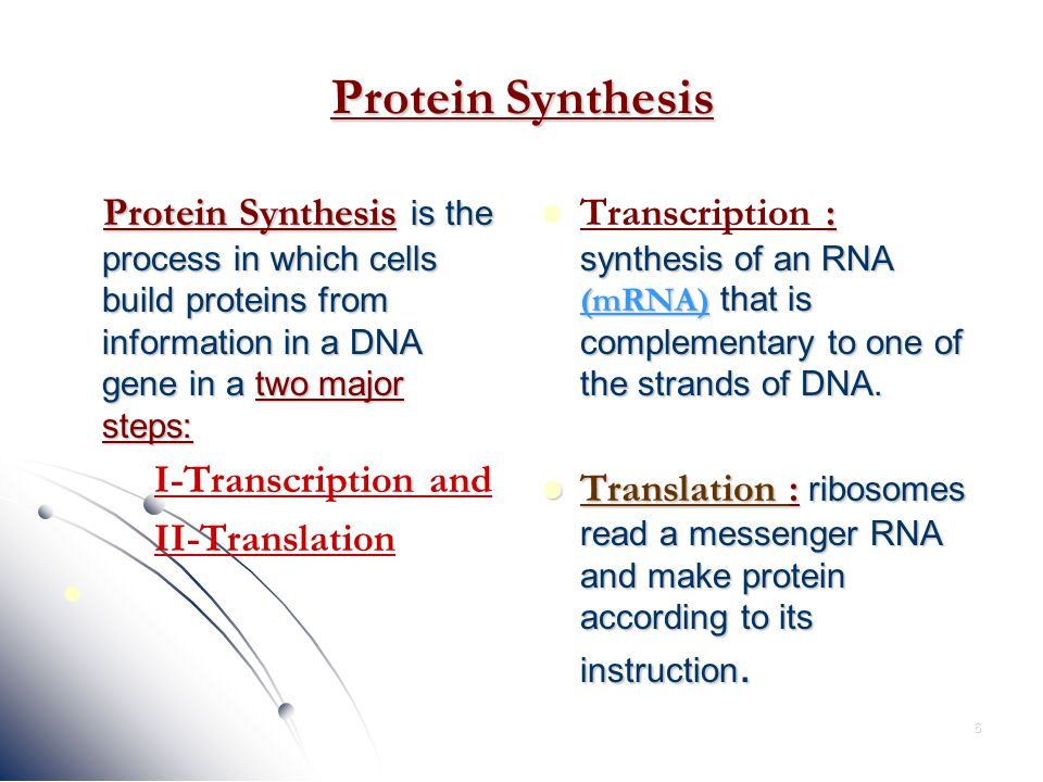 Protein Synthesis Steps
