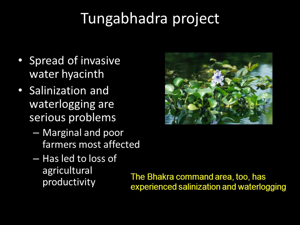 Tungabhadra project Spread of invasive water hyacinth