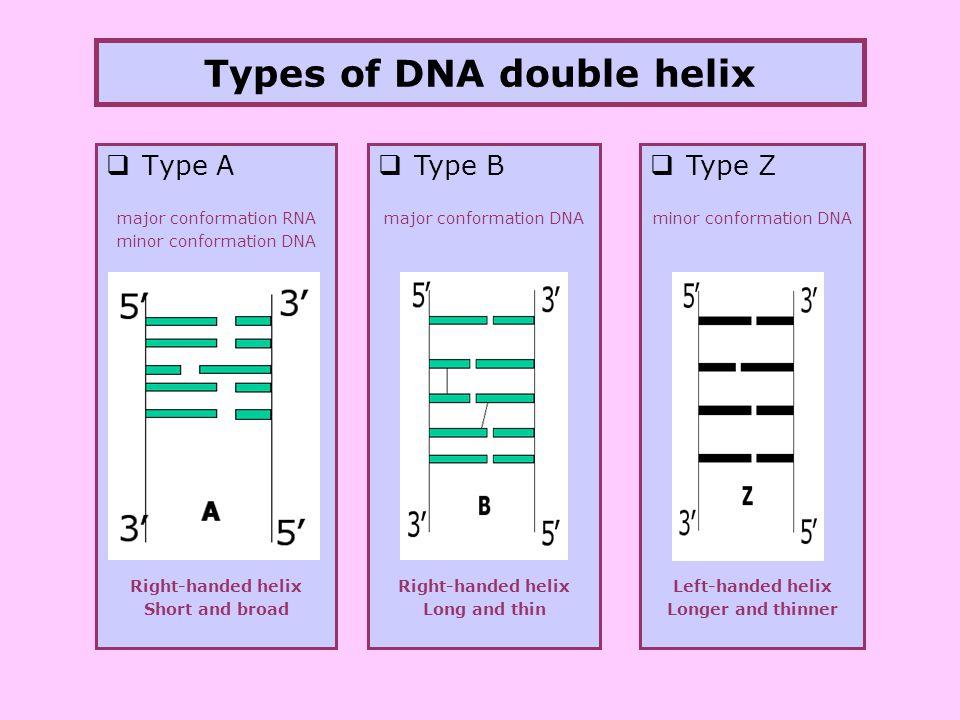 dna  protein structure