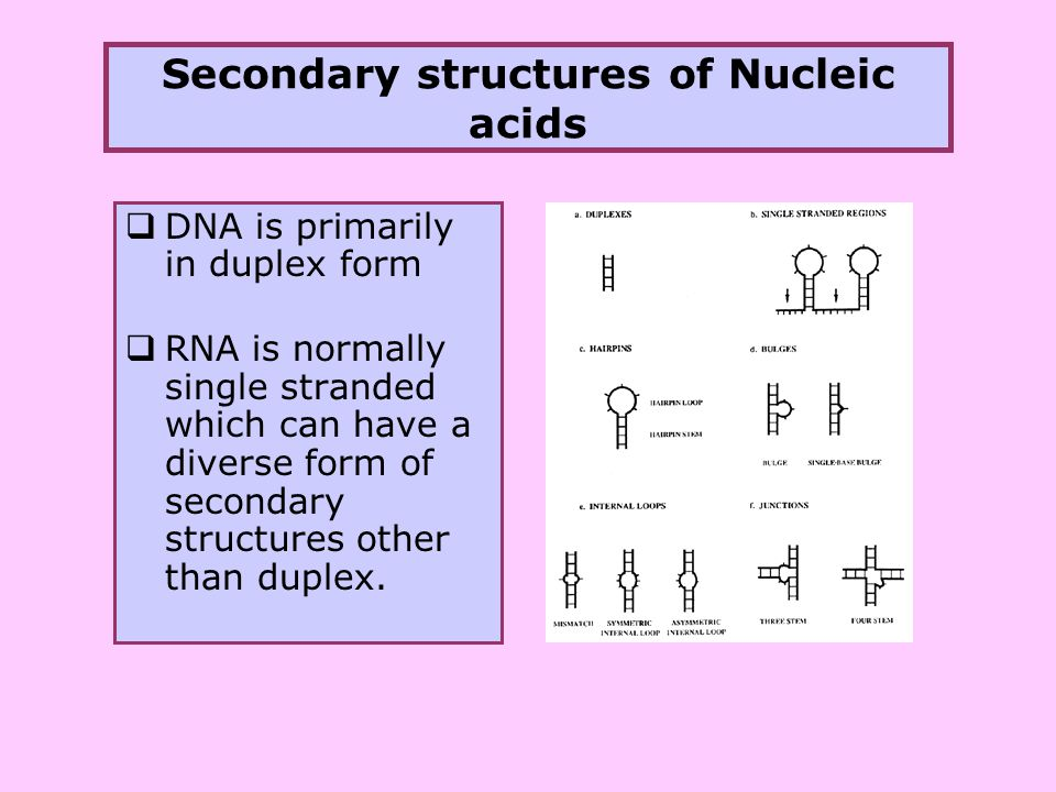 an analysis of nucleic acids and protein synthesis in dna Nucleic acids and protein synthesis all materials © cmassengale cell à nucleus à chromosomes à genes à dna proteins organic molecules (macromolecules) made by cells make up a large part of.