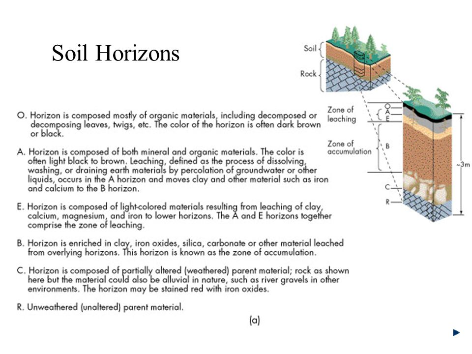 Soil horizons worksheet the image kid for Soil horizons