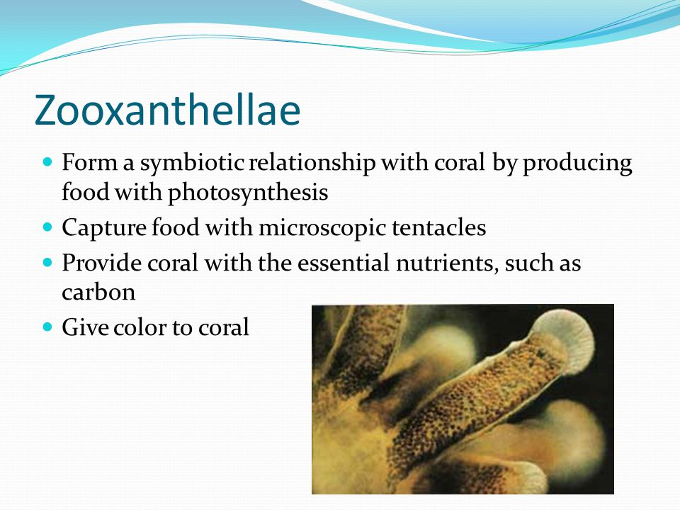 zooxanthellae and coral relationship problems