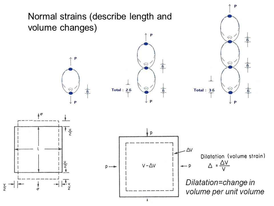 Normal strains (describe length and volume changes)