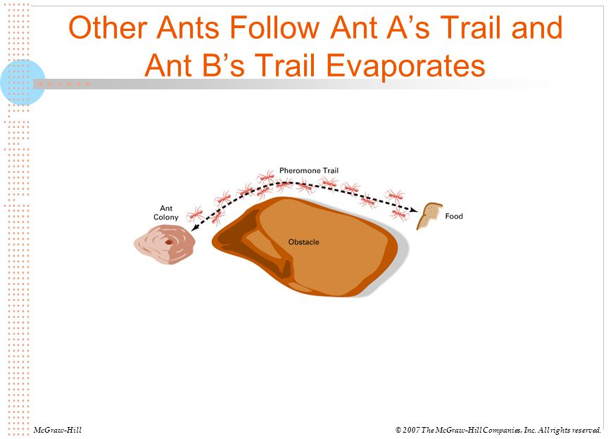 Other Ants Follow Ant A's Trail and Ant B's Trail Evaporates
