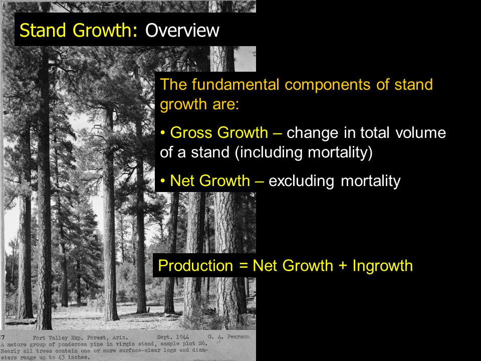 Stand Growth: Overview