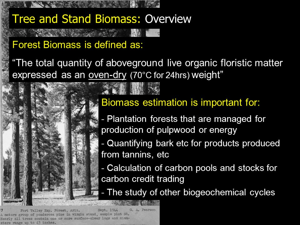 Tree and Stand Biomass: Overview