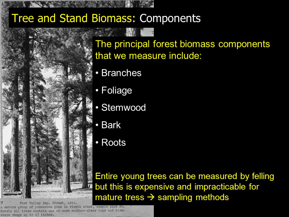 Tree and Stand Biomass: Components