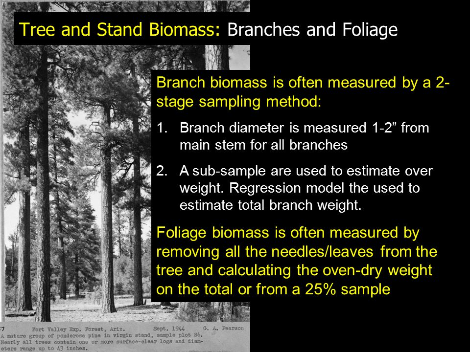 Tree and Stand Biomass: Branches and Foliage