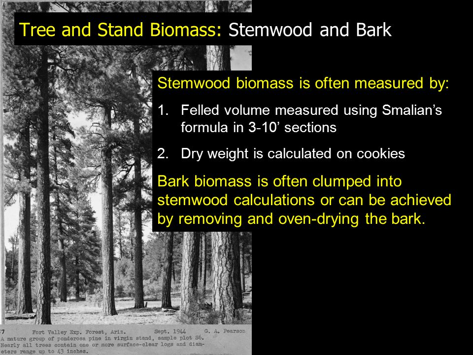 Tree and Stand Biomass: Stemwood and Bark