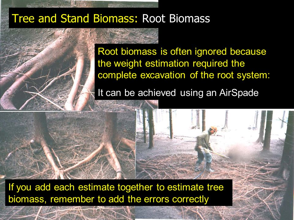Tree and Stand Biomass: Root Biomass