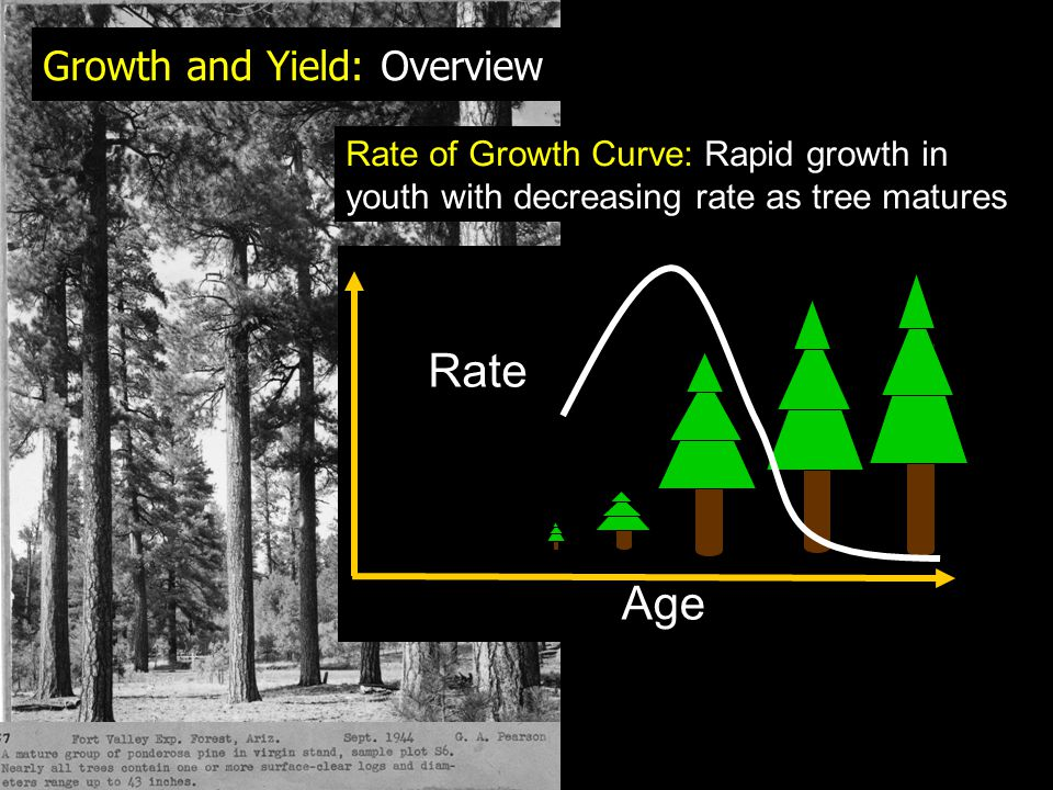 Growth and Yield: Overview
