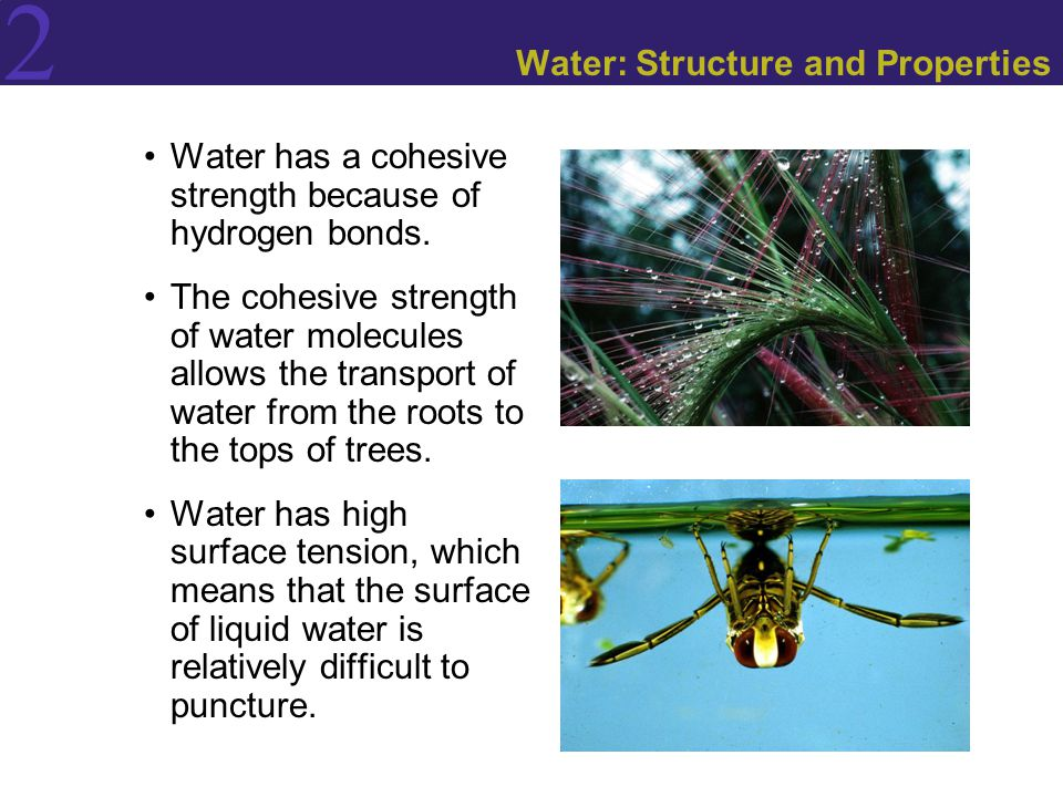 Water: Structure and Properties