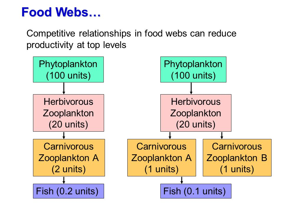 Food Webs… Competitive relationships in food webs can reduce productivity at top levels. Phytoplankton.