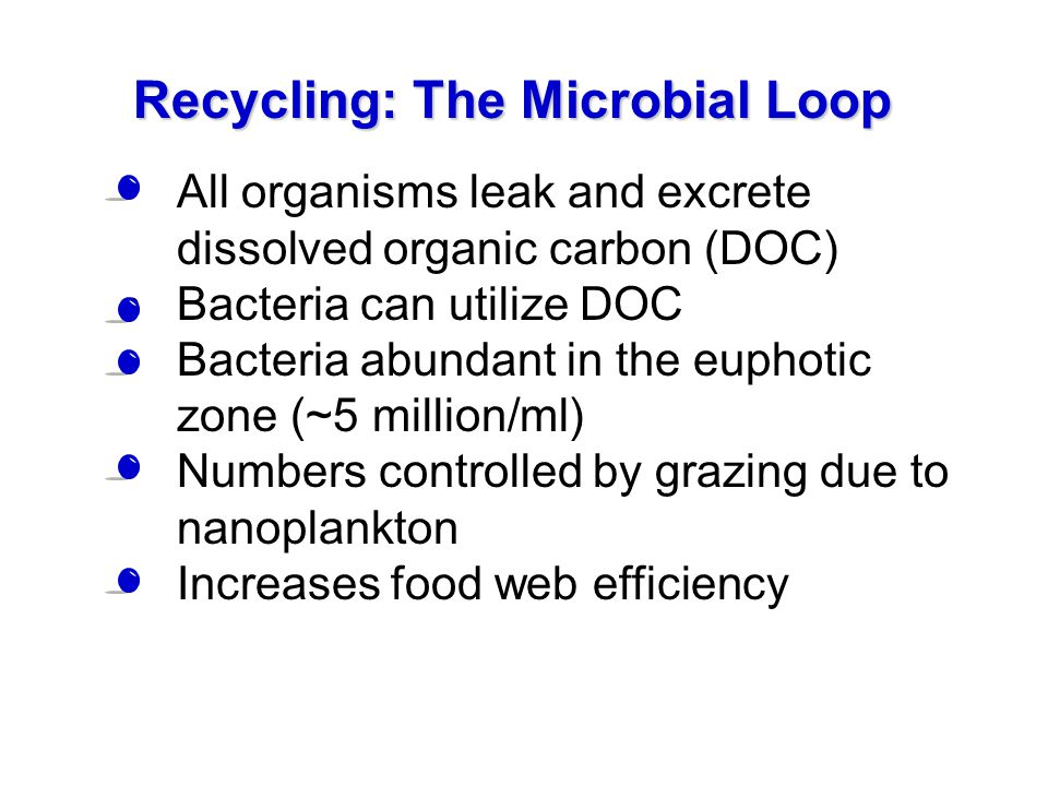 Recycling: The Microbial Loop